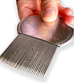 peigne anti poux et anti lentes acier aya - Poux Sur Cheveux Colors